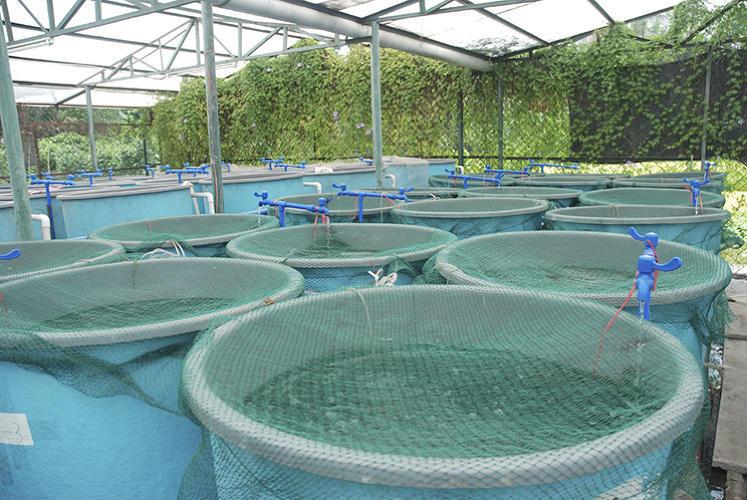 Аквапонічний рибовод