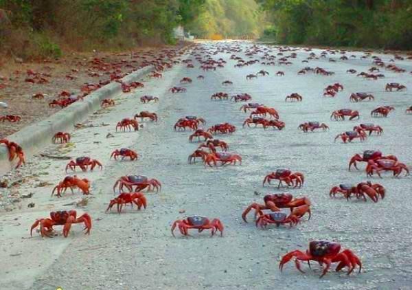 Екодук, або переходи через дорогу для тварин